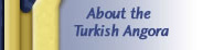 About Turkish Angoras